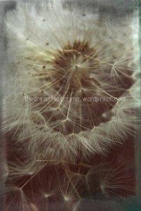 dandelion2blog